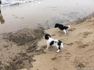 Dune en Jonna