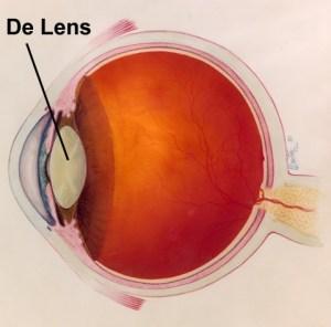 de lens van het oog