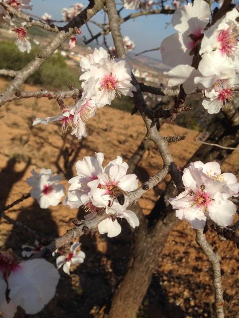 Springtime at the Vineyard