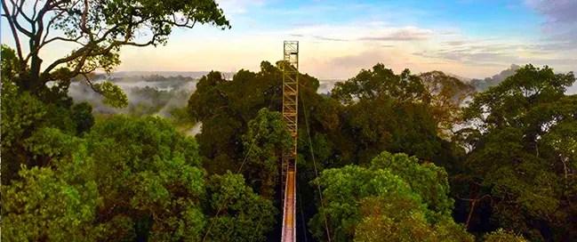 الحديقة الوطنية أولو تيمبورونغ الطبيعة