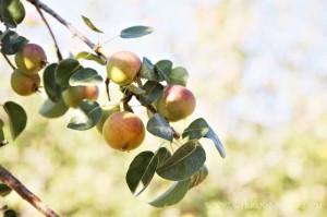 una mela per afrodite
