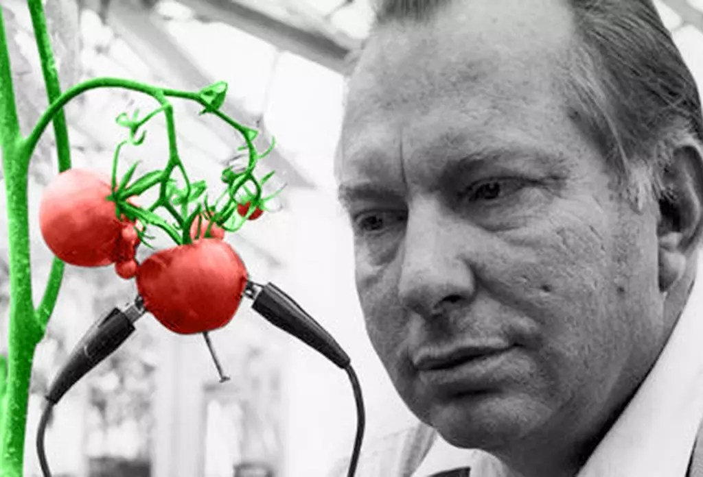 ron and the tomato christmas colors.jpg