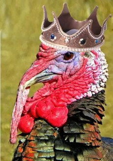 the prince thought he was a turkey