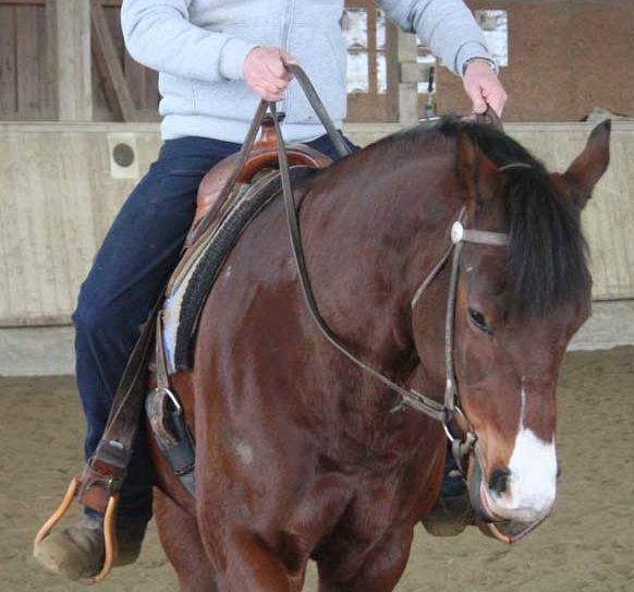 pferd lenken schenkel