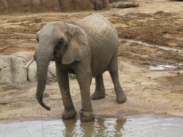 san diego zoo veterans discount