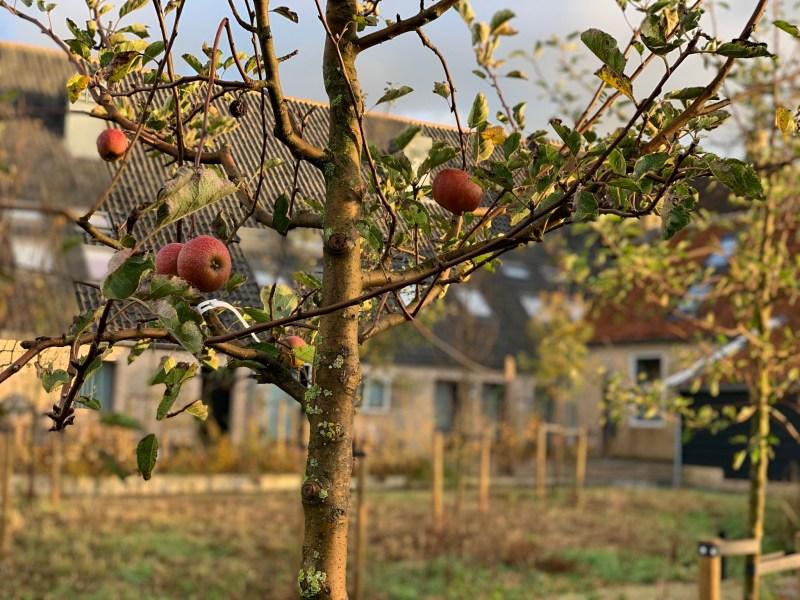 Appels in de tuin