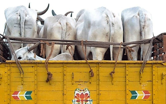 Cattle smugglers attack Gaushala's caretaker and steal three cows in Bharatpur