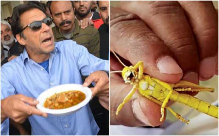 Karachi faces severe swarms of locusts, Pakistani minister urges people to eat them in biriyani
