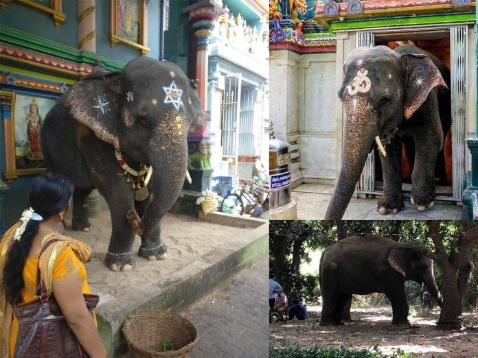 Lakshmi elephant Manakula Vinayagar Temple
