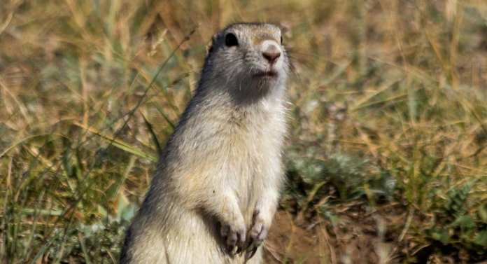 Cases of suspected Bubonic plague emerge in China's Inner Mongolia