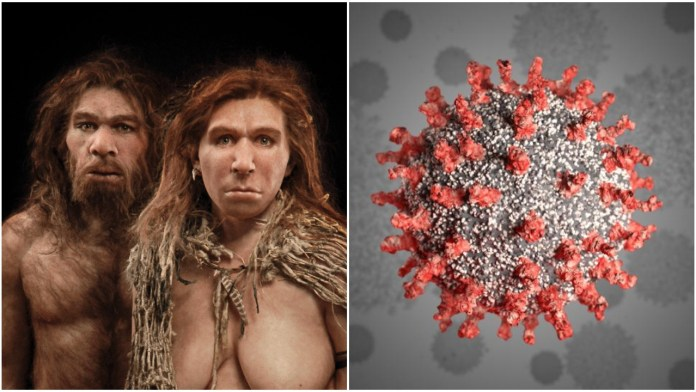 Genome segment inherited from interbreeding with neanderthals linked with higher coronavirus risk, says study
