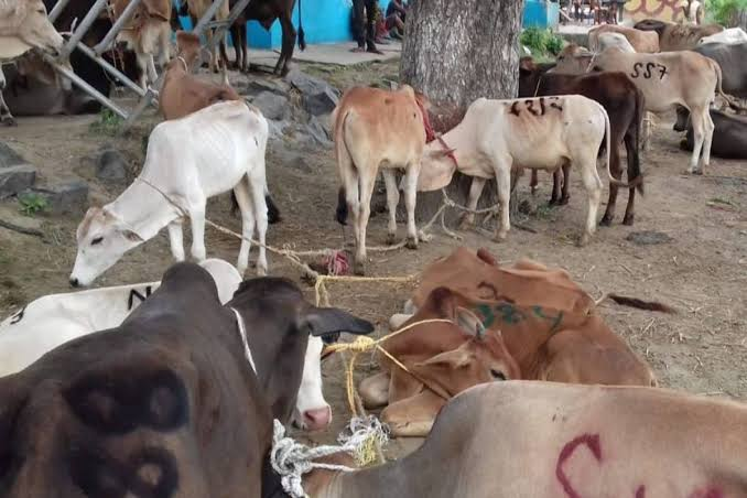 CBI conducts multiple raids to stop illegal cattle trade along the India-Bangladesh border