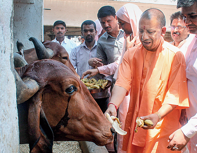 CM Yogi on cow slaughter