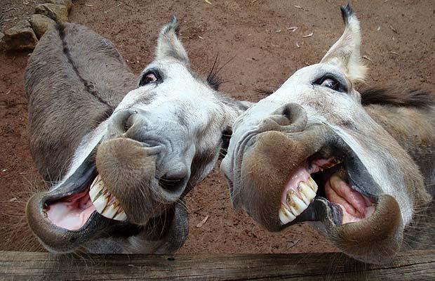 Chitrakoot donkey fair