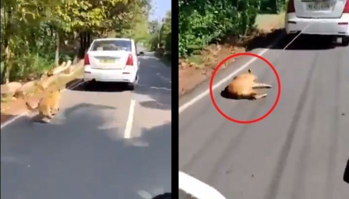 Kerala: Yusuf, who tied a dog to car and dragged for miles, arrested