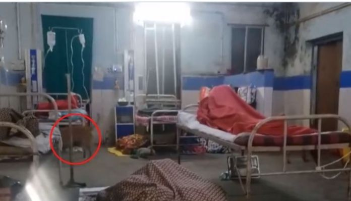 Maharashtra: Stray dogs on the loose in govt hospital ward in Nagpur