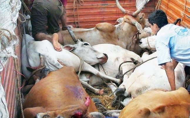 3 BSF personnel suspended in relation to cattle smuggling case