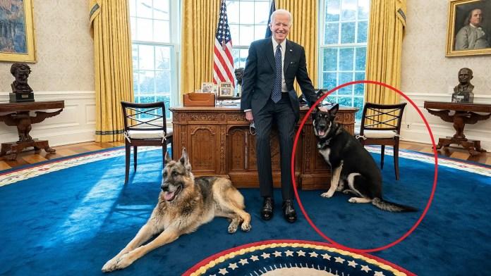 Joe Biden with Champ and Major (circled)