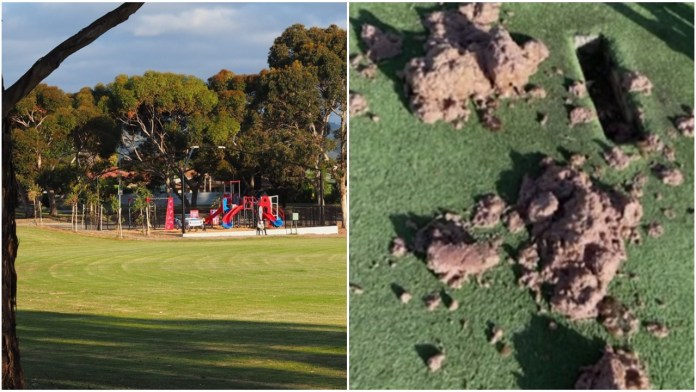 Hindu community in Adelaide outraged after minced beef was found dumped in a community cricket pitch