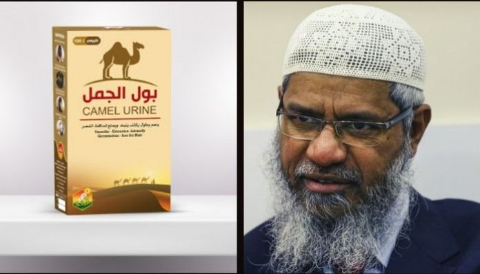 Drinking camel urine is pure, cannot say the same about cow urine: Zakir Naik