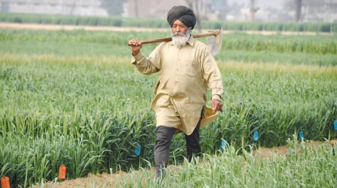 Punjab: Govt procures record quantity of wheat, bypass middlemen