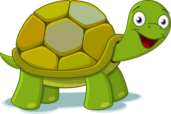 Aurangabad: Man booked for demanding 21-nailed tortoise as dowry