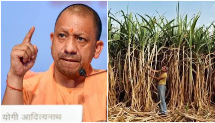 UP govt clears 26,000 crores worth dues of sugarcane farmers