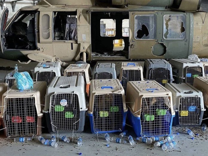Contract working dogs for the military left behind in Kabul by US govt.