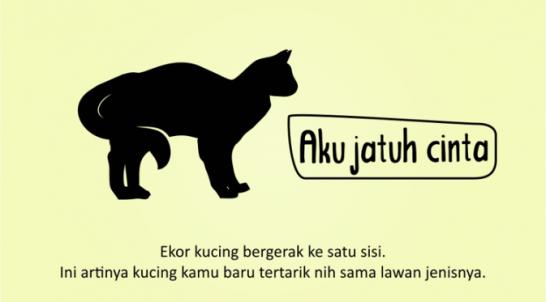 Kenali_Suasana_Hati_Kucing_dari_Gerak_Ekornya_6
