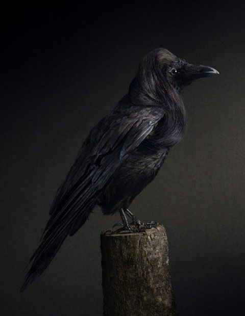 coiffure oiseau