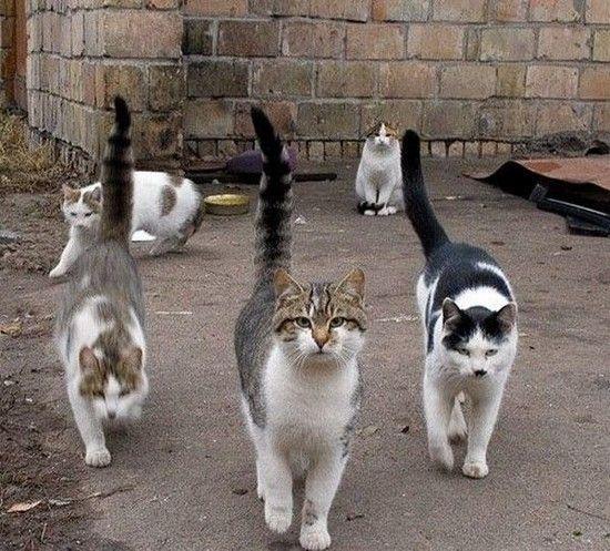 chats gang
