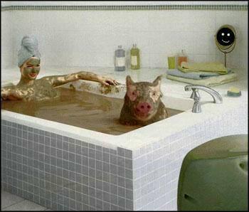bain-cochon