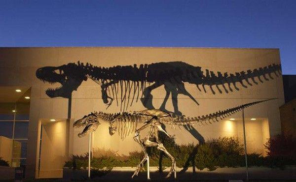 mini-tyrannosaure-vivait-alaska-70-millions-annees