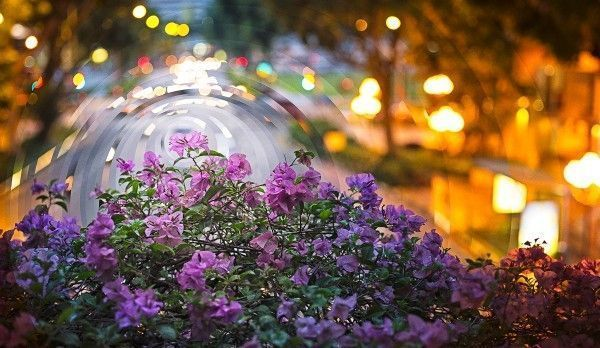 night_day_bougainvillea_sunset_circle-Edit