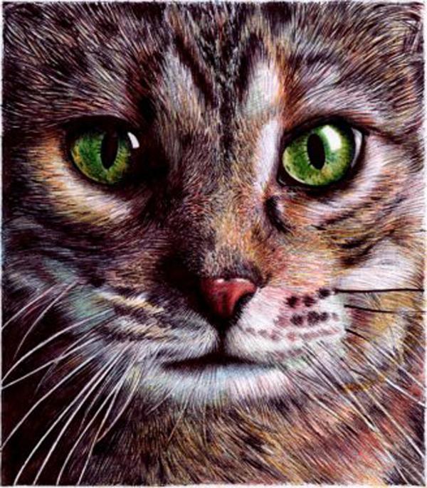 cat-silva