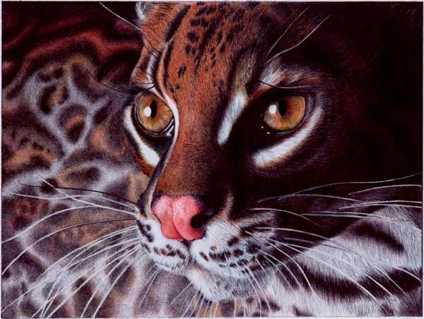 margay_cat