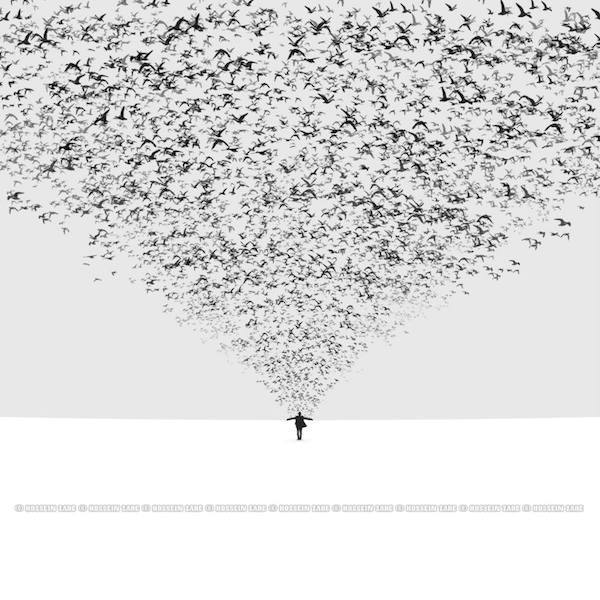 hossein zare oiseaux