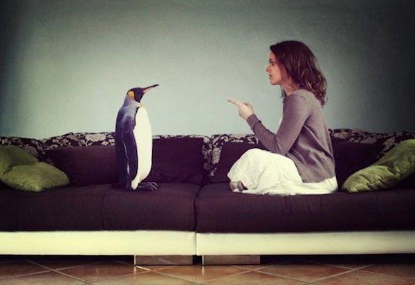 Photo pingouin