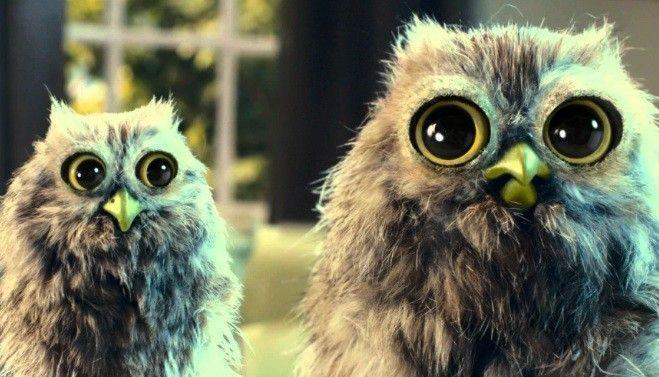 mcvities bn owls