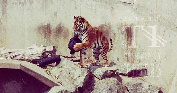 zoo jeans tigre