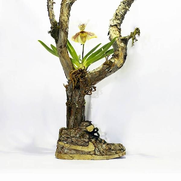 just-grow-it-epiphyte-6