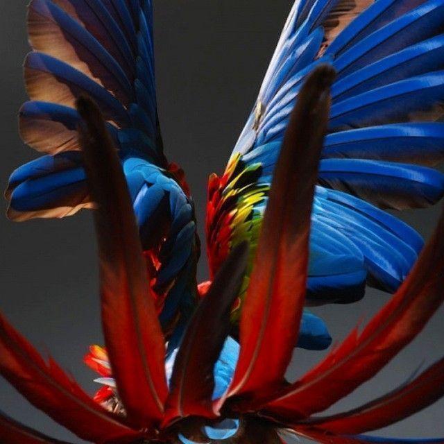 solve-sundsbo-perroquet-photographie