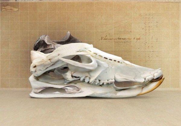 sneakers expo paris