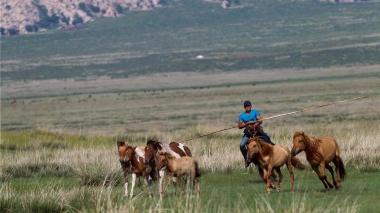 mongolie 8