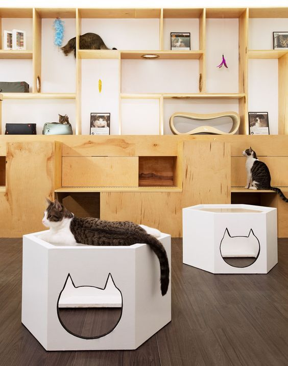 bar à chats