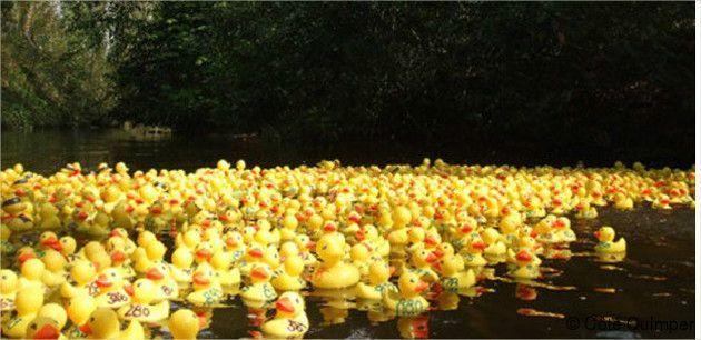Duck-race-1