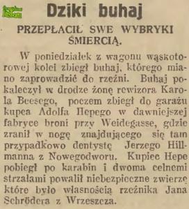 """Dziki buhaj - artykuł z """"Gazety Gdańskiej, gazety Morskiej"""" z 1 sierpnia 1929 roku"""