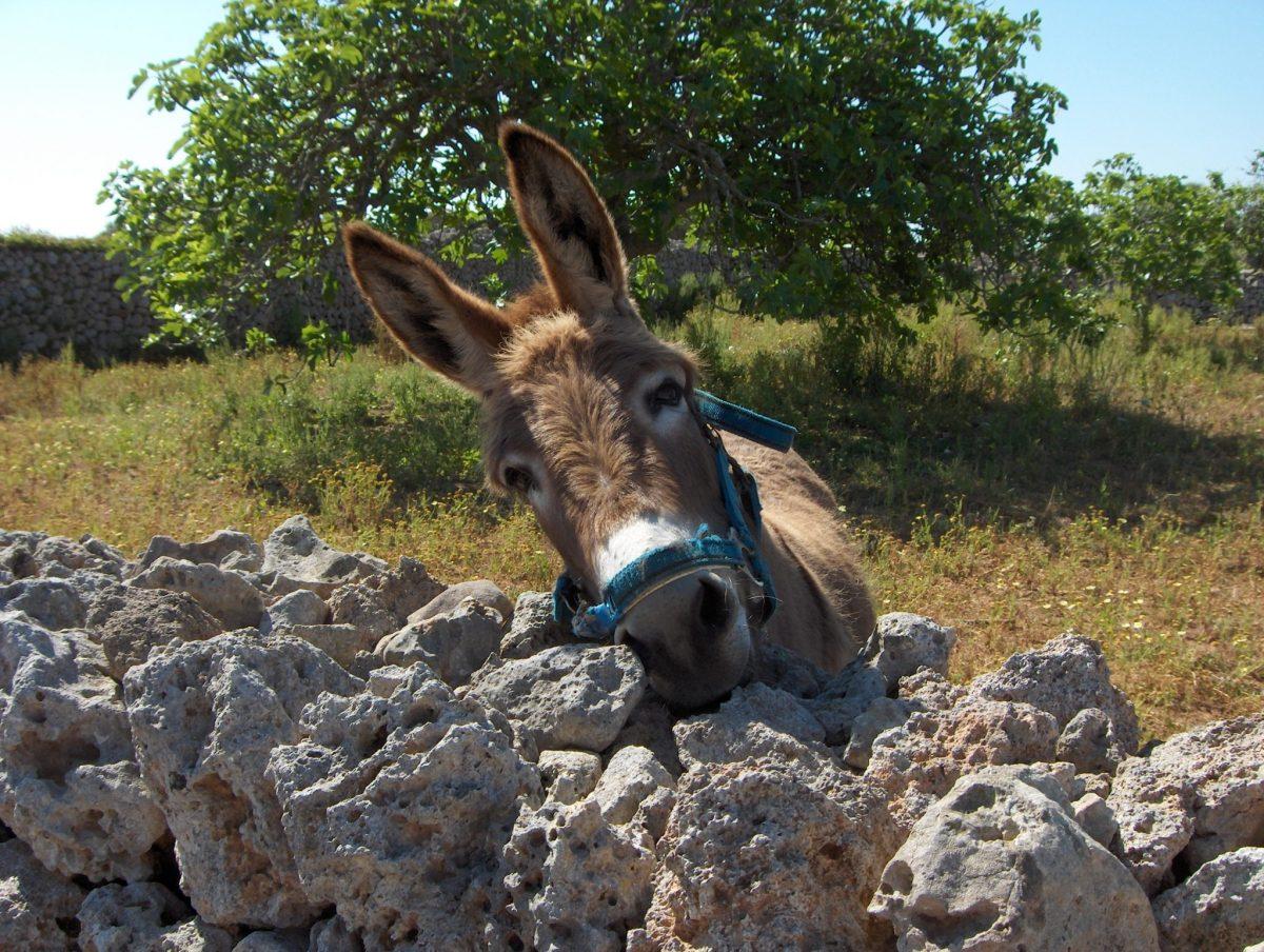 Wandelen op Menorca: te mooi om door te vertellen!