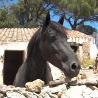 Menorca: wandelen in het voetspoor van een raspaard