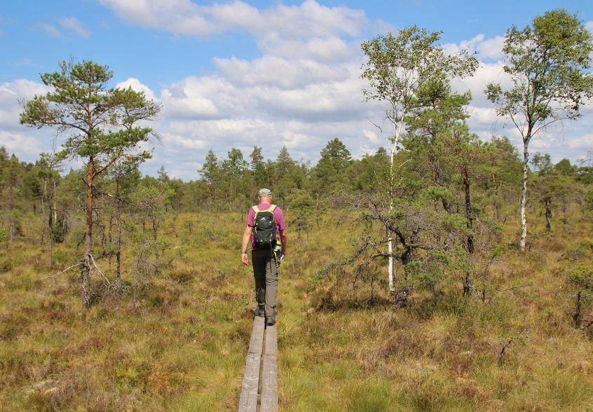Store Mosse: wandelen door het hoogveen